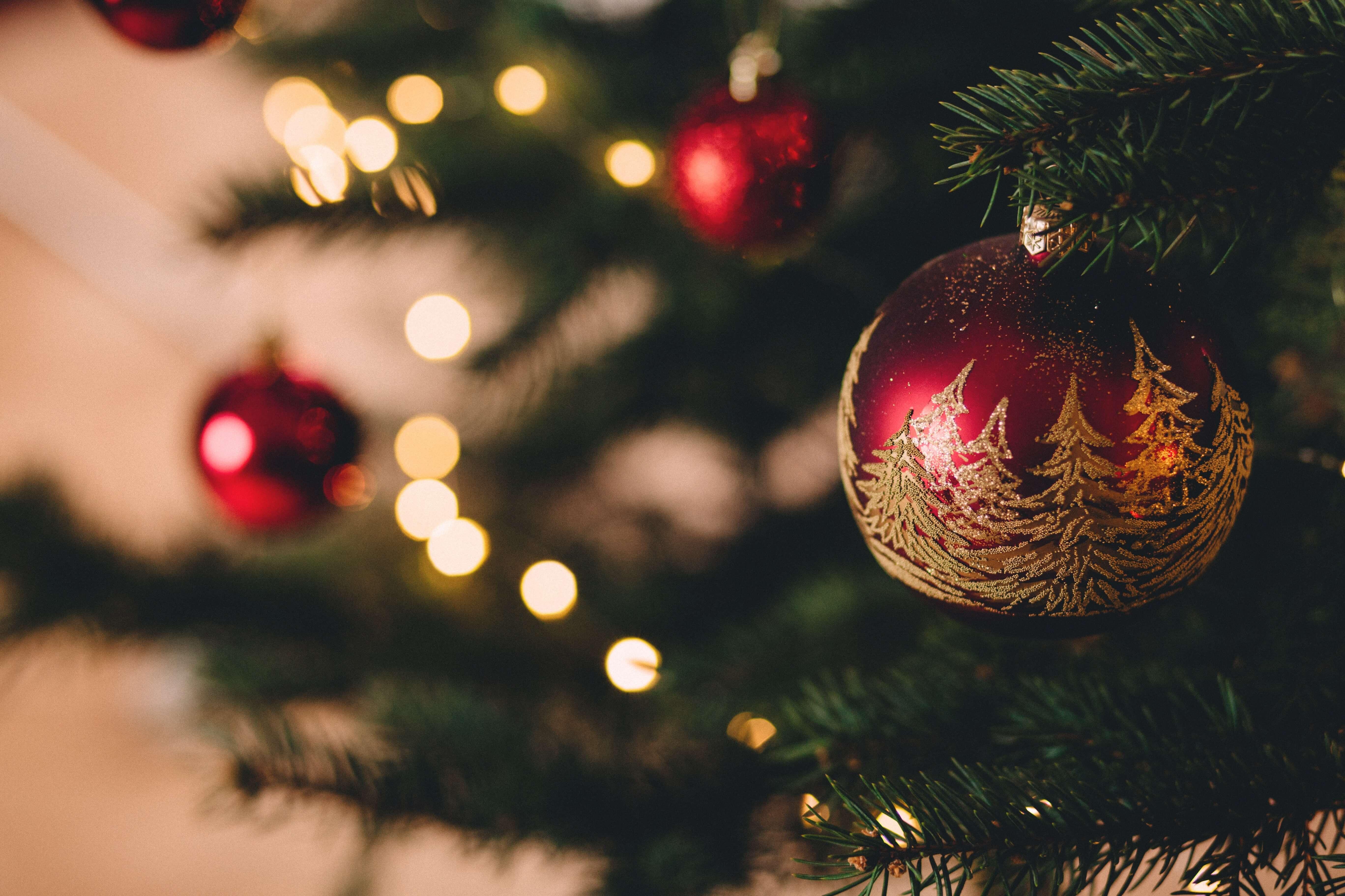 FORWARD Christmas Newsletter